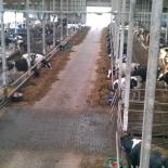 Lehmad tallis